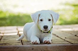 Ziektekostenverzekering hond